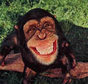 Monkey singe
